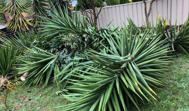 garden waste rubbish removal melbourne before